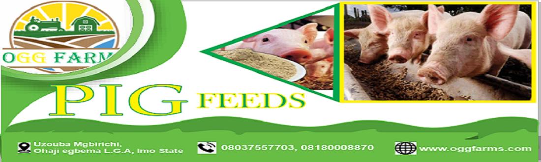 buy pig feeds in Nigeria