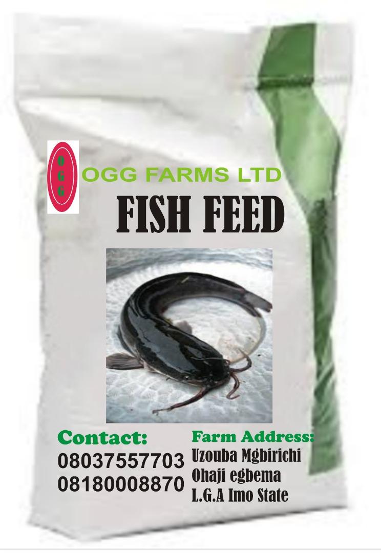 fish feeds supplier